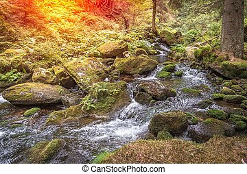 Mountain stream in green forest at summer time