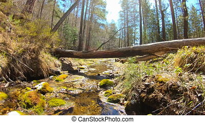 Mountain stream in the forest. 4K