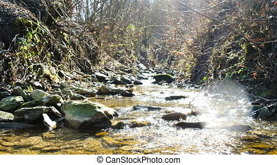 Mountain stream in the forest, the water flows through the stones in the spring on a sunny day,