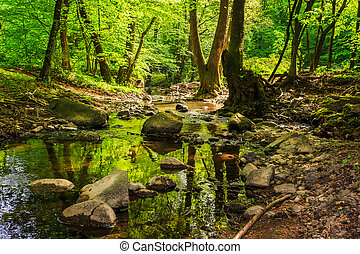 mountain stream in the old forest - mountain stream making...