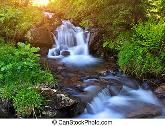 Mountain stream in the summer woodsat at sunrise