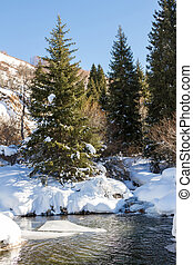 mountain stream in winter the trees