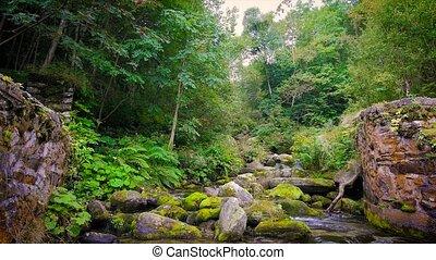 mountain stream - beautiful alpine stream in a sunny day