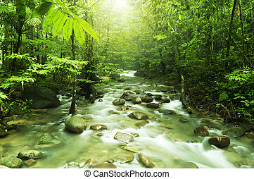 Mountain stream - Tropical mountain stream with sunbeam in a...