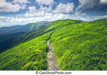 mountain summer landscape - summer landscape. mountain path...