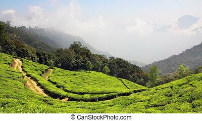 mountain tea plantation in Munnar Kerala India - timelapse