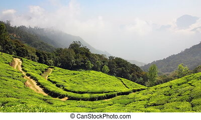 mountain tea plantation in Munnar Kerala India - timelapse