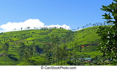 mountain tea plantation in Sri Lanka - timelapse