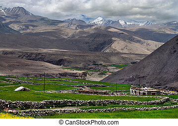 Mountain Tibetan village: green fields, stone small houses and long pebble fences crossing the fields, in background of the chain of high peaks, Northern India.