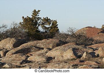 Mountain top cedar tree