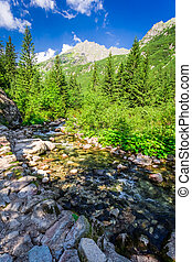 Mountain trail by the stream in sunny day