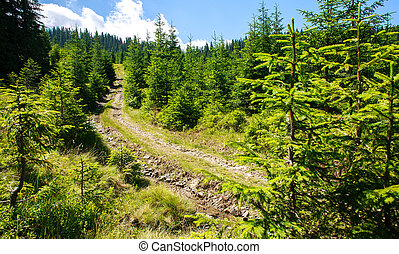Mountain trail in pine forest on background of daytime sky