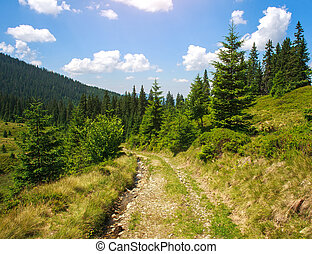 Mountain trail road in a pine forest on the sky background