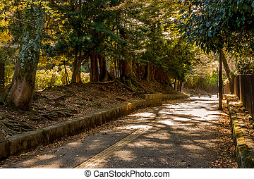 Mountain trail with trees and foliage on ground