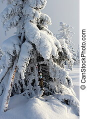 Mountain Tree In The Snow Dresses.