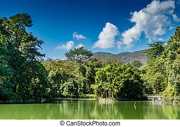 Mountain trees and green lake
