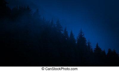 Mountain Trees Dark Against Mist At Night - Trees...
