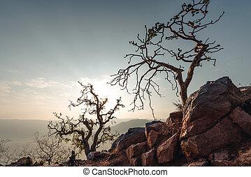 Mountain trees in dawn. India.