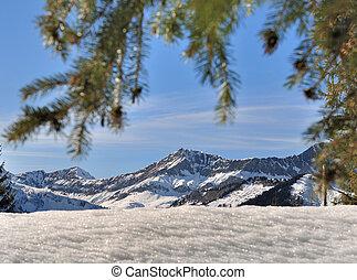 mountain under fir branch