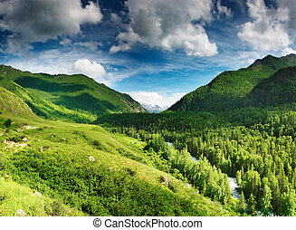 Mountain valley - Mountain landscape with forest and blue...