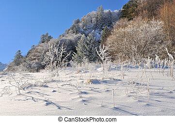 mountain vegetation in winter