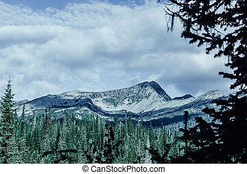 Mountain view from the valley with a pine forest. Travelling in the mountains.