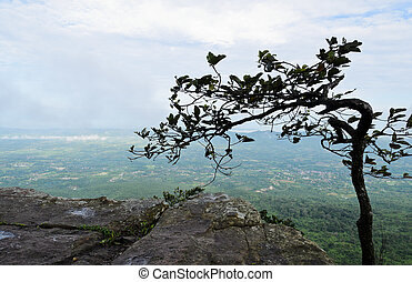 Mountain view in foggy - Cliff's edge with wild tropical ...