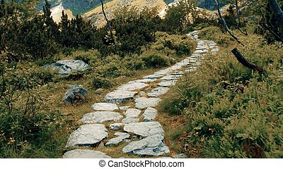Mountainous forest rock path - The mountainous forest rocky ...