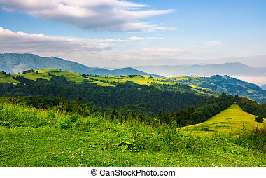 mountainous landscape in the morning. fresh summer scenery...