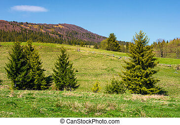 mountainous landscape with coniferous forest. lovely...