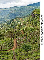 The Central Province - the central mountainous terrain of Sri Lanka.