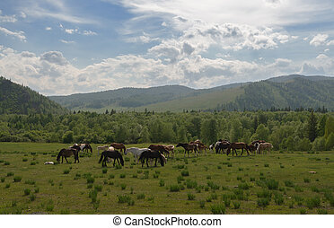Mountains and horses - Warm, sunny days. A small herd of ...