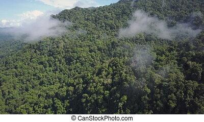 A medium shot of mountains and jungle trees. Camera move forward