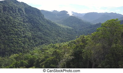 Mountains and jungle trees shot