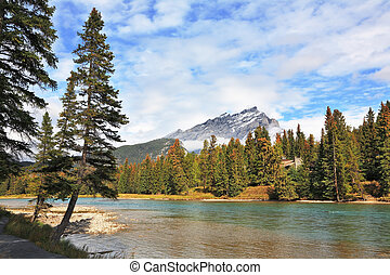 Mountains and pines at the mountain river Banff