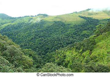 Mountains and tropical rain forest in Thailand