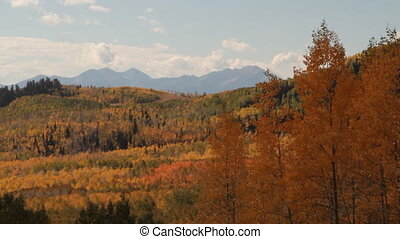 mountains and yellow aspen trees