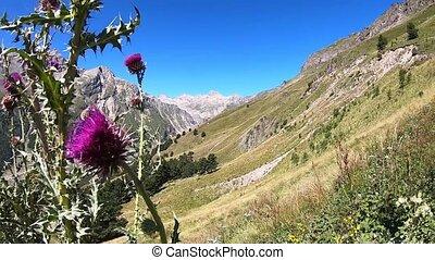 Mountains bumblebee bush blue sky
