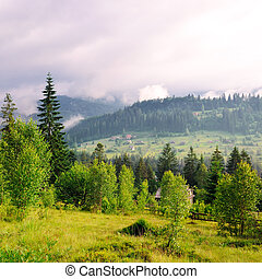 Mountains, coniferous trees and clouds in the evening sky.