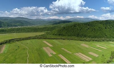 Mountains covered with green forest and river. Carpathians....