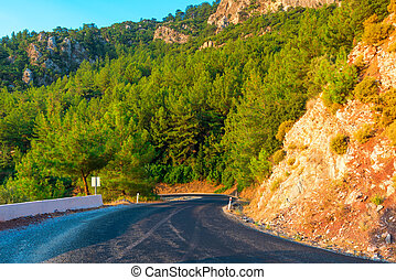 mountains covered with pine trees and mountain road