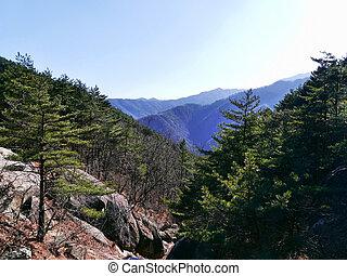Mountains forest in Seoraksan National Park. South Korea