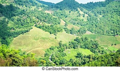 Mountains in northern Thailand with tea plantations