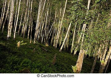 Mountains in San Jose, Costa Rica