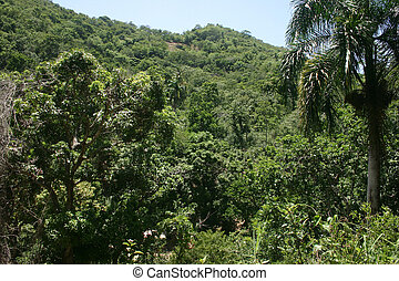 Mountains in the Dominican Republic - Mountains near Laguna...