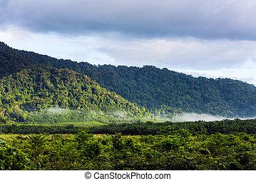 Mountains in tropical rainforest Thailand