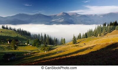 Mountains in Ukraine early morning with fog - Mountains in...