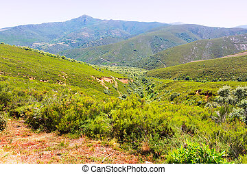 Mountains landscape in summer
