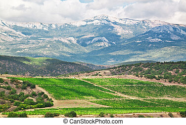 mountains  - Crimean mountains and vineyards in the summer