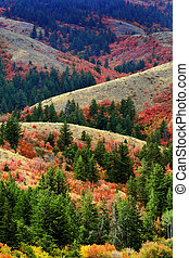 Mountains with Fall Autumn Colors Maple Pine Gold Orange and Green